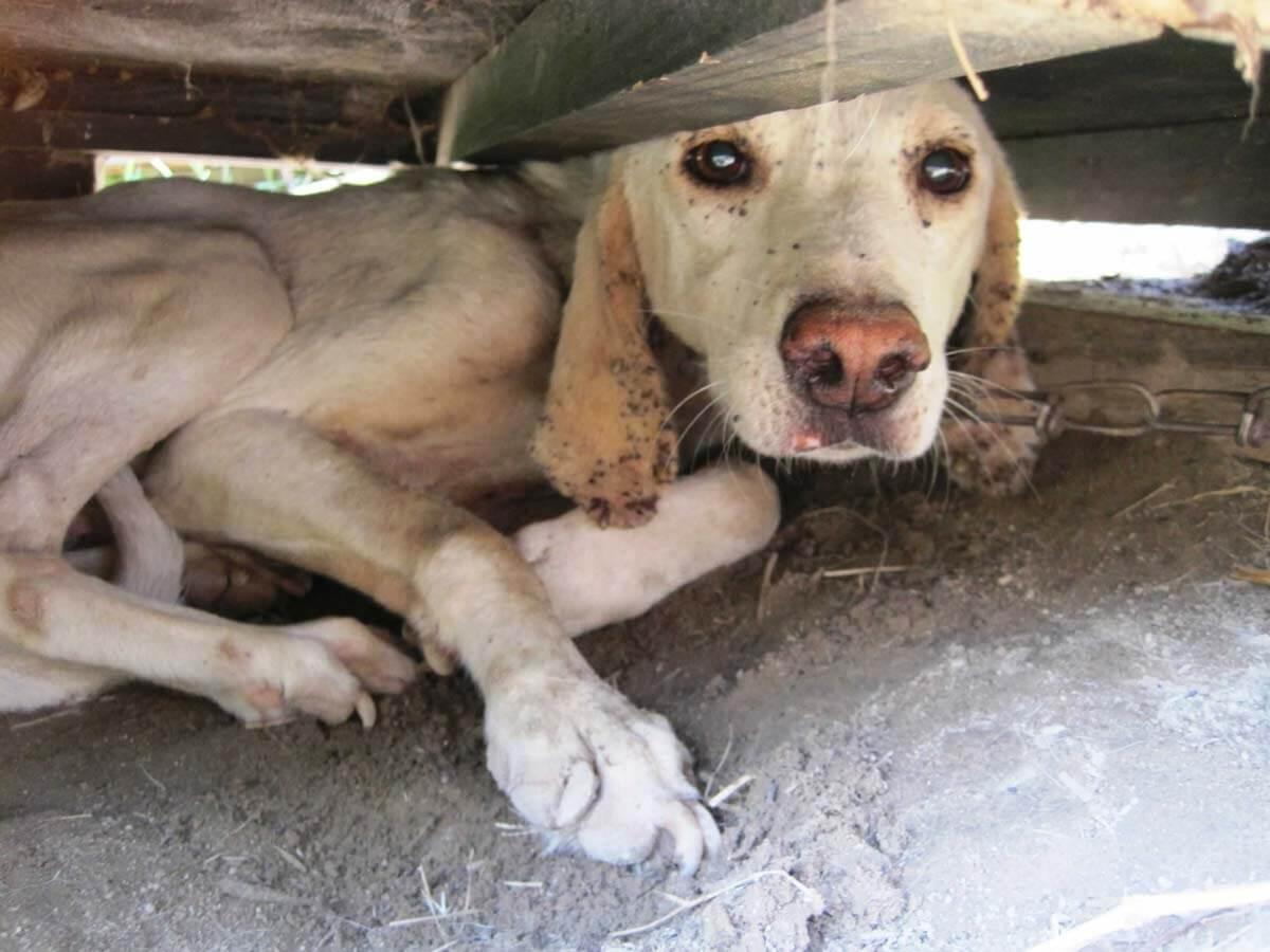 lets fix la spay neuter help dogs
