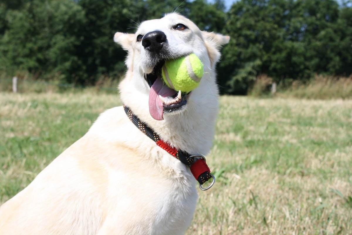 lets fix la happy dog with tennis ball