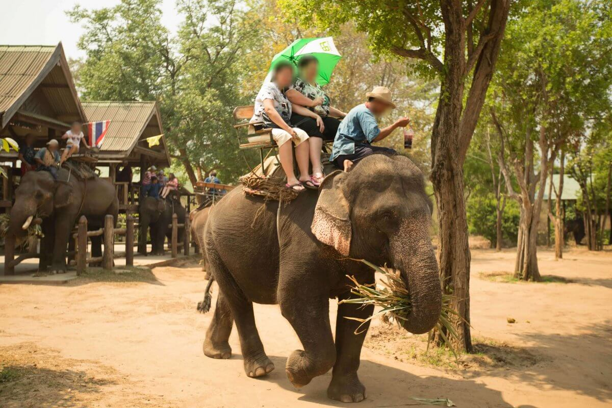 10 Reasons Why You Should Say No to Cruel Elephant Rides  10 Reasons Why ...