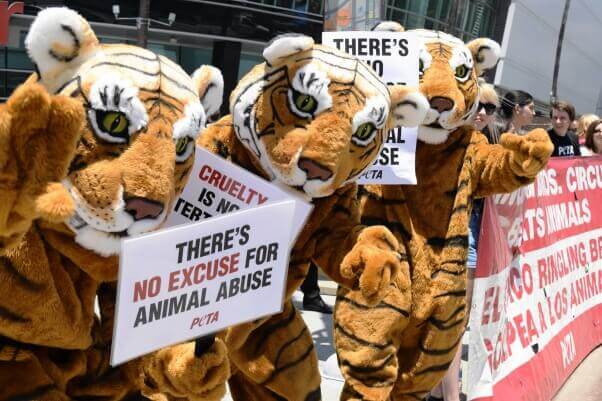 take action: tell circuses to end wild animal acts