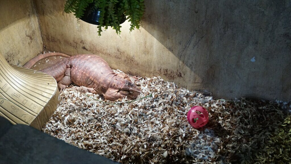 Take Action Tell Malls To Refuse Cruel Seaquest Aquariums