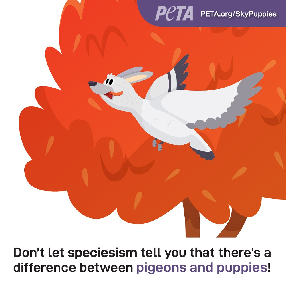 What on Earth Are Sky Puppies? PETA Gives Pigeons a PR Makeover