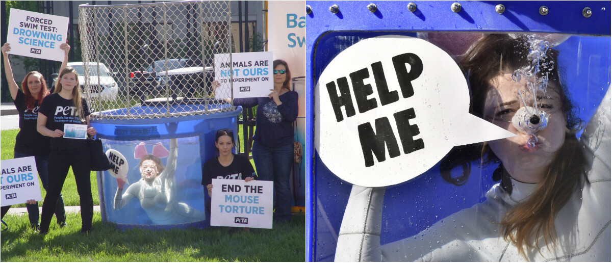 best-peta-photos-2019-eli-lily-forced-swim-test-protest