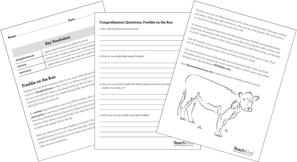 Freddie on the Run Cow lesson and worksheet papers