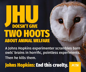 Baltimore Newspaper Ad About Owl Experiments