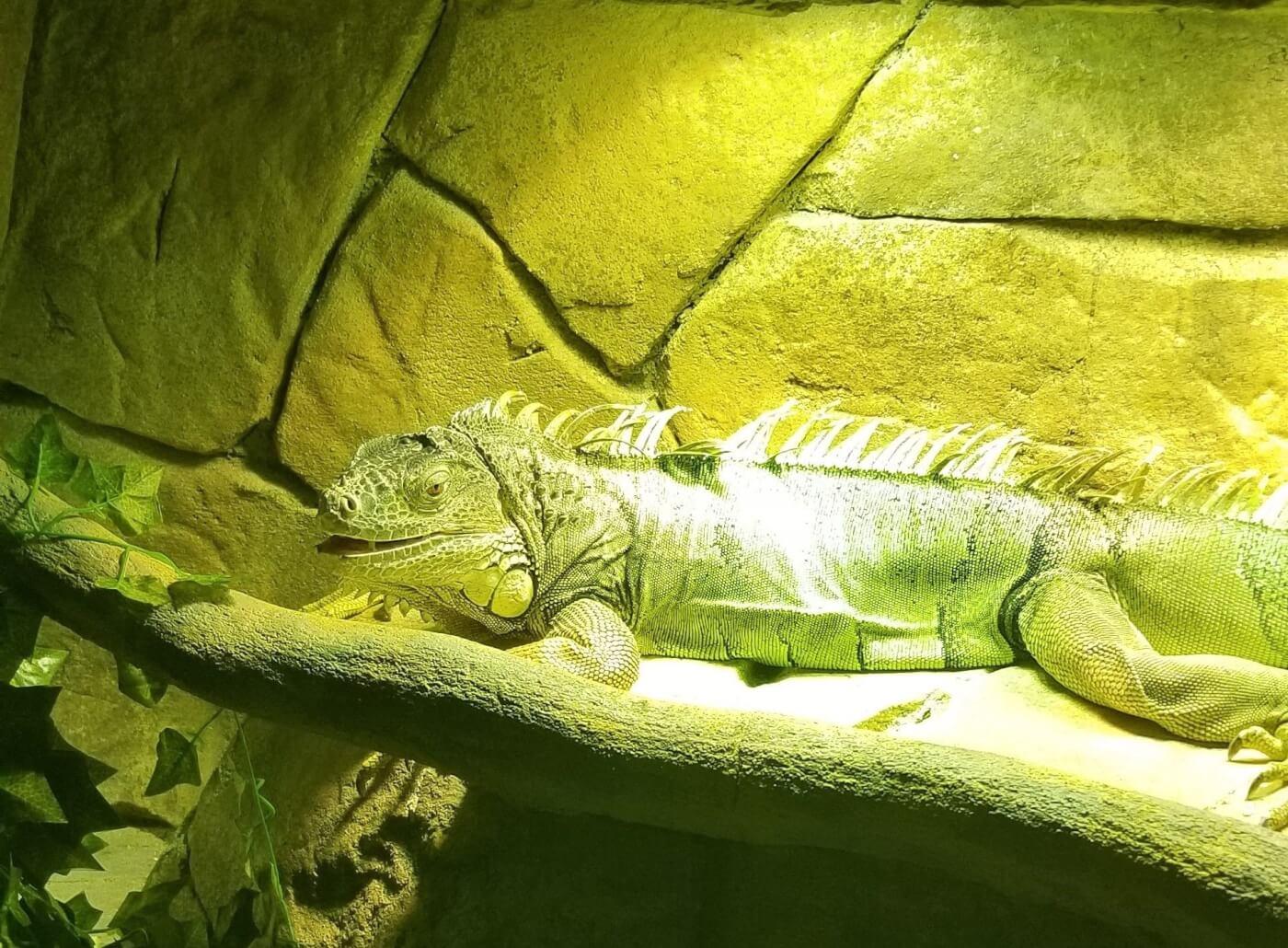 photo of iguana at seaquest