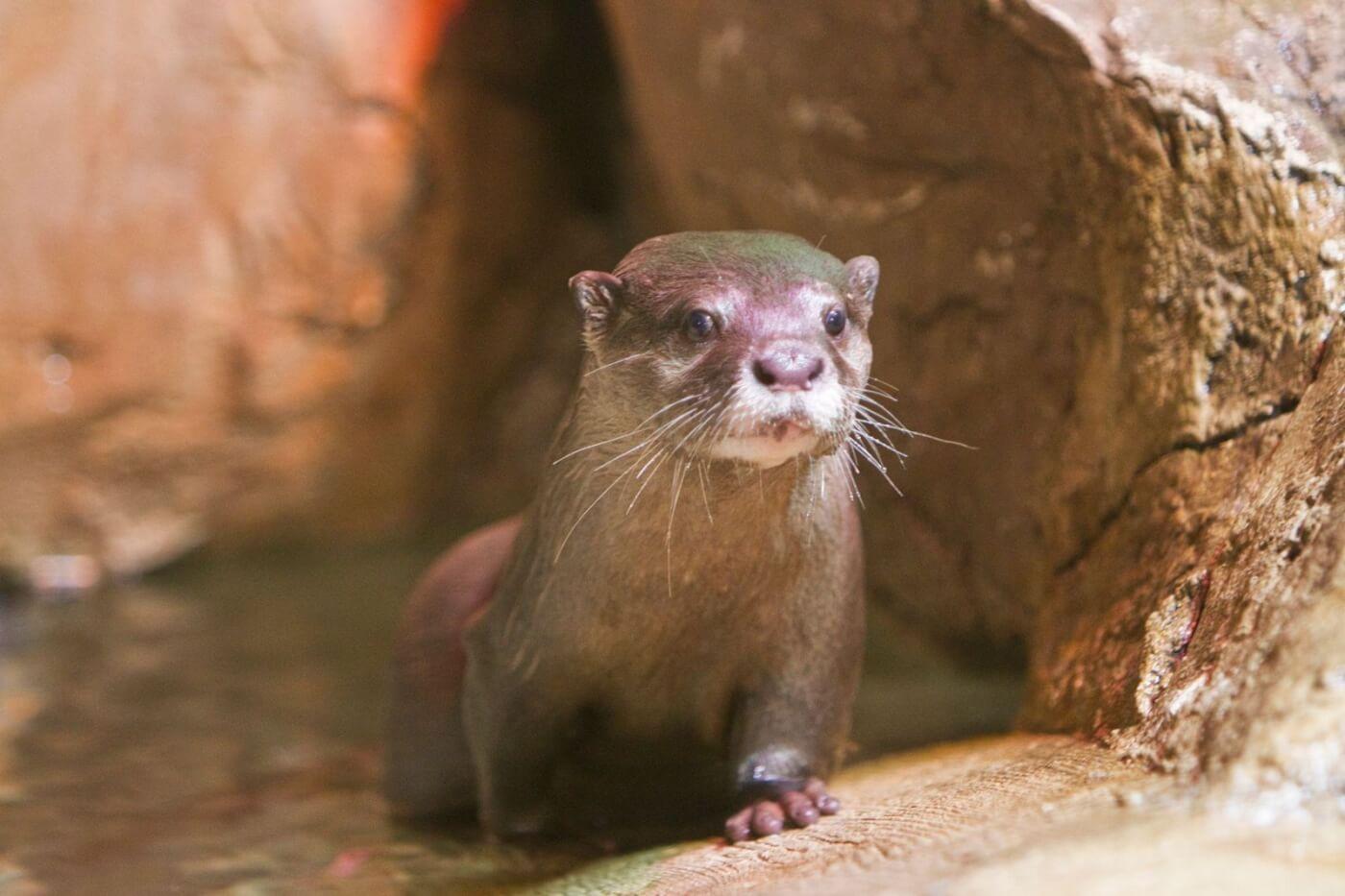 photo of seaquest otter