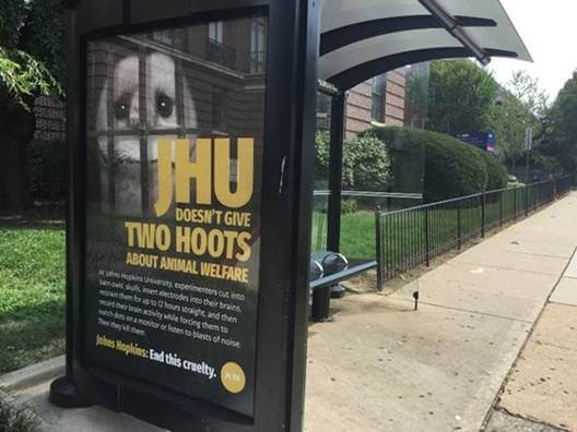 JHU Bus Shelter Ad