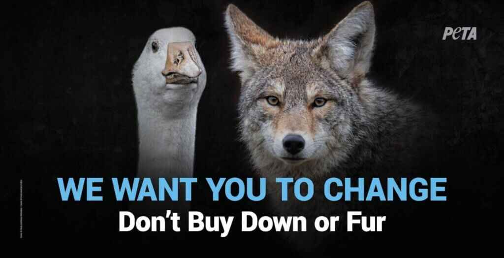take action canada goose fur and down