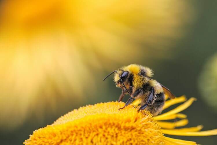 be remarkable like bees, go vegan for Earth Day