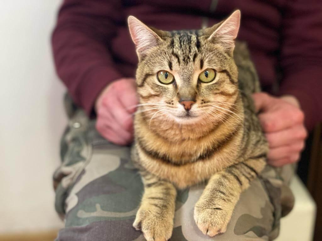 A cat in Romania.