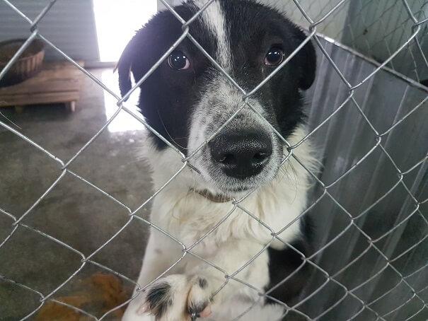 a dog in Romania.