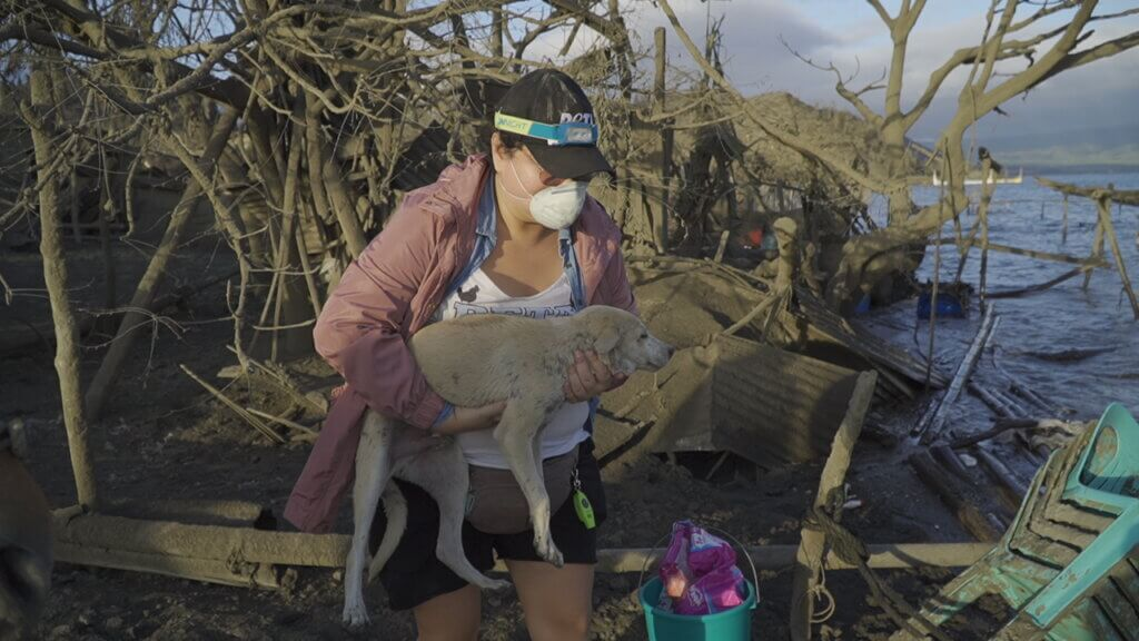 PETA Asia rescue workers save animals from the devastating Taal volcano eruption in the Philippines.