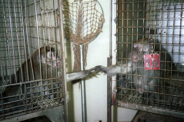 two monkeys in a Silver Spring laboratory
