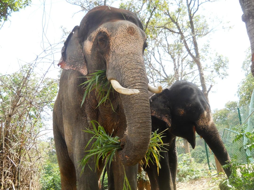 Sunder and Lakshmi eating together.