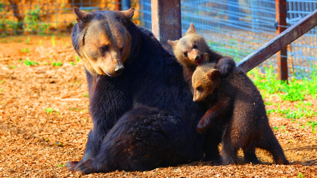 Ursala and Cubs